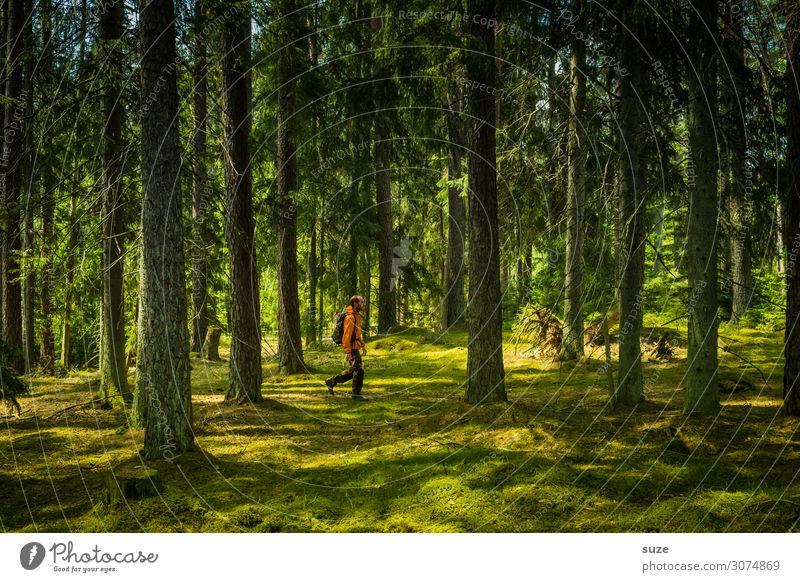 Das wars - ab nach Hause Wald Schweden Urlaub Wandern Freiheit Umwelt Natur grün Nadelwald Kiefern Weg Ziel Klima Gesundheit Mensch Märchen Märchenwald