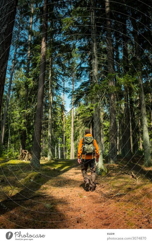 Gutzufuß im Wald Gesundheit Ferien & Urlaub & Reisen Abenteuer Freiheit Sommerurlaub wandern Mensch maskulin Mann Erwachsene Umwelt Natur Landschaft Pflanze