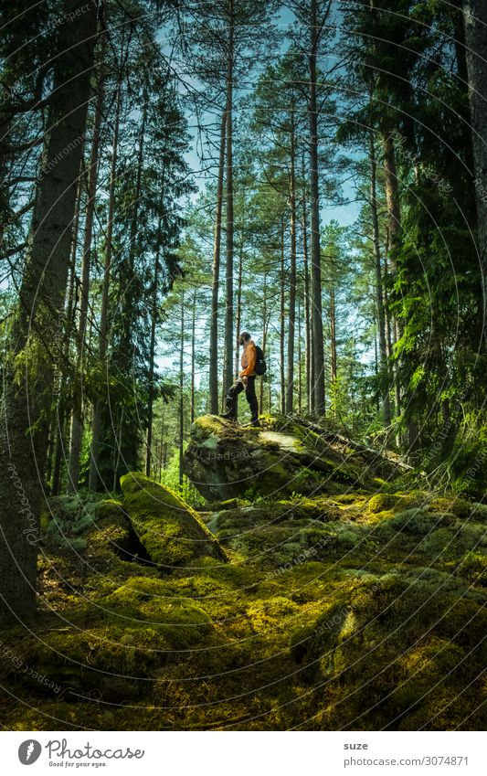 Waldmeister Gesundheit ruhig Ferien & Urlaub & Reisen Ausflug Abenteuer Freiheit wandern Mensch maskulin 1 30-45 Jahre Erwachsene Umwelt Natur Landschaft