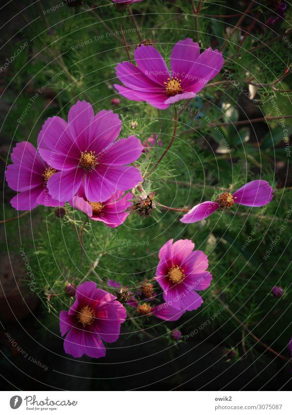 Körbchenschmuck Natur Sommer Pflanze schön Landschaft Blume Umwelt Blüte Wiese Garten Zusammensein leuchten Wachstum Idylle Lebensfreude Sträucher
