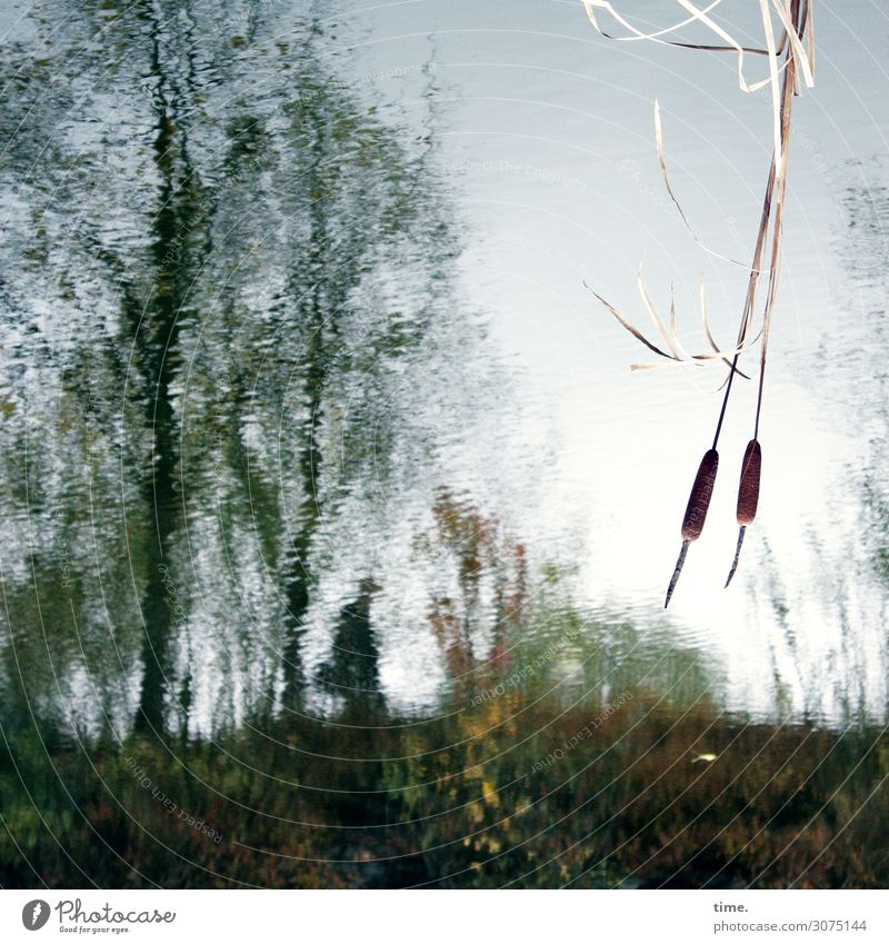 Oktoberblues Umwelt Natur Landschaft Pflanze Wasser Himmel Baum Teich See Sumpf Sumpfpflanze Rohrkolben Bewegung Denken gehen dunkel Flüssigkeit kalt maritim