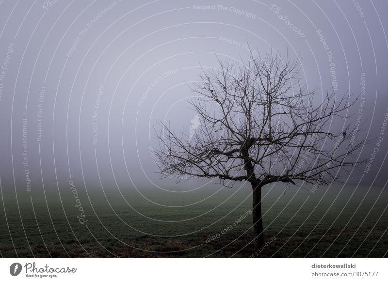 Baum im Nebel Umwelt Natur Pflanze Herbst Winter schlechtes Wetter Traurigkeit gruselig kalt träumen Angst Frustration Vergänglichkeit ungemütlich grau