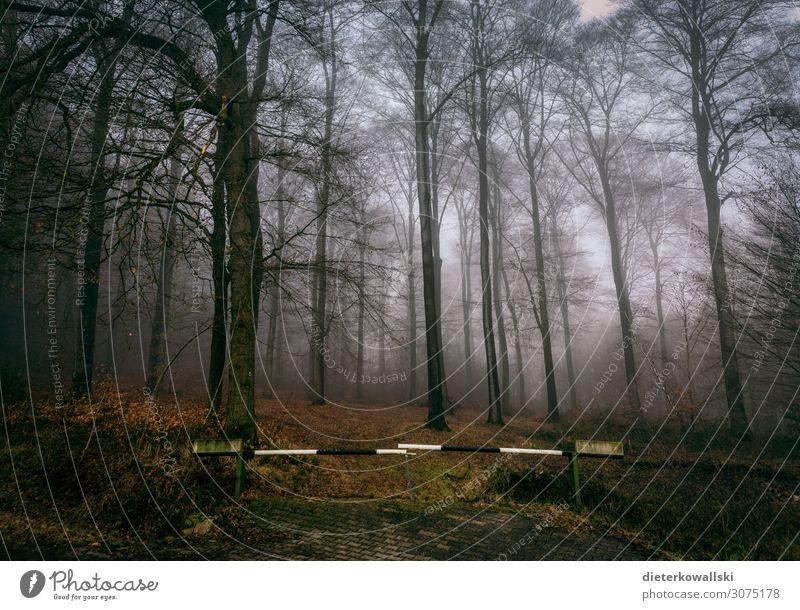 Wald Umwelt Natur Pflanze Nebel Baum dunkel schön trist kalt Herbst gruselig unheimlich Farbfoto Morgen
