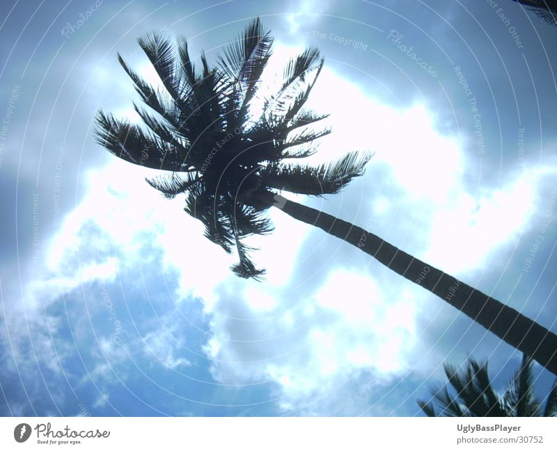 Palme Sonne Wolken Thailand