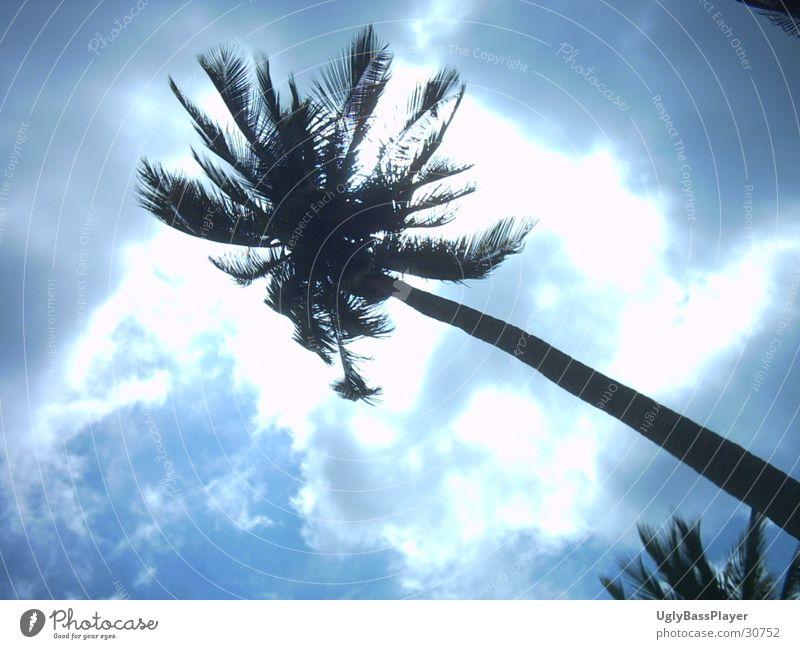 Palme Wolken Thailand Licht Sonne Schatten Kontrast