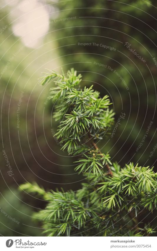 Wald Ferien & Urlaub & Reisen Tourismus Ausflug Abenteuer Ferne Freiheit Expedition Sommer Sommerurlaub wandern Garten Umwelt Natur Landschaft Pflanze Tier Baum