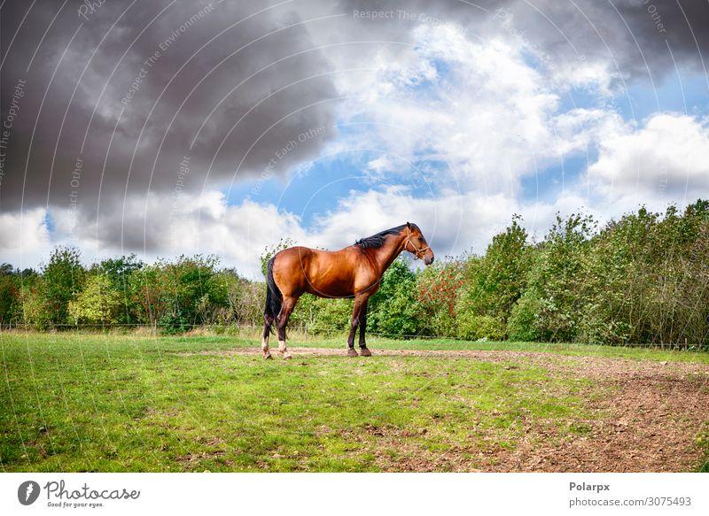 Braunes Pferd auf einer grünen Wiese stehend schön Sommer Industrie Menschengruppe Natur Landschaft Tier Himmel Wolken Horizont Baum Gras Fressen hell braun