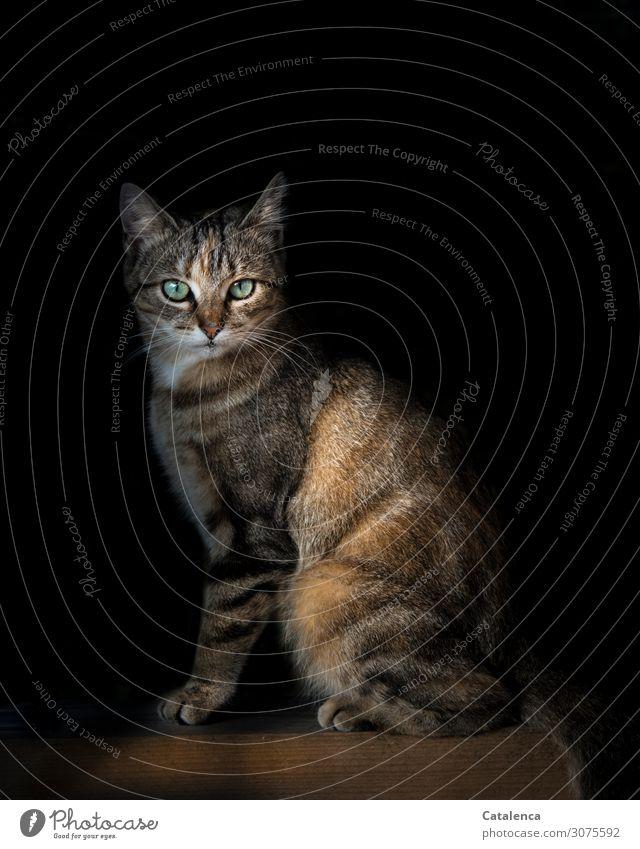 Katzenportrait Haustier 1 Tier Balken Holz beobachten sitzen schön klein braun grün schwarz weiß Stimmung Natur Zufriedenheit Hauskatze Farbfoto mehrfarbig