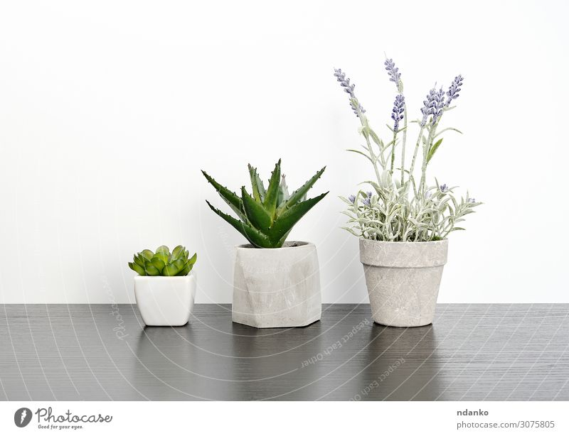 drei Keramiktöpfe mit Pflanzen auf einem schwarzen Tisch elegant Stil Haus Dekoration & Verzierung Büro Natur Blume Blatt Blüte Holz Wachstum einfach frisch