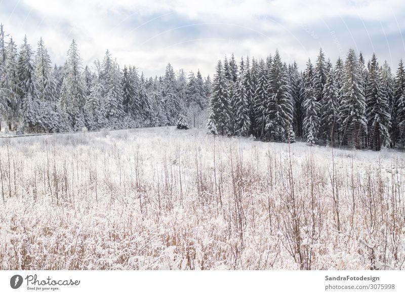 Winter landscape in Bavaria Erholung ruhig Freizeit & Hobby Ferien & Urlaub & Reisen Schnee Winterurlaub wandern Weihnachten & Advent Natur Baum Wald beobachten