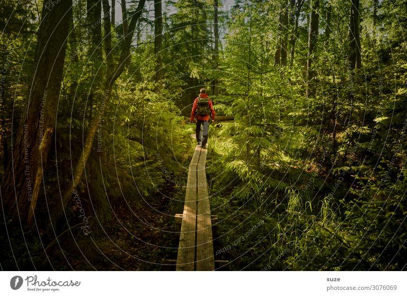 Vorneweg Mensch Ferien & Urlaub & Reisen Natur Pflanze grün Landschaft ruhig Wald Gesundheit Erwachsene Umwelt Wege & Pfade Freiheit Ausflug wandern maskulin
