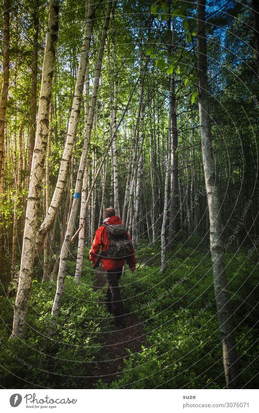 Der Weg zieht sich Gesundheit Ferien & Urlaub & Reisen Abenteuer Freiheit Sommerurlaub wandern Mensch maskulin Mann Erwachsene Umwelt Natur Landschaft Pflanze