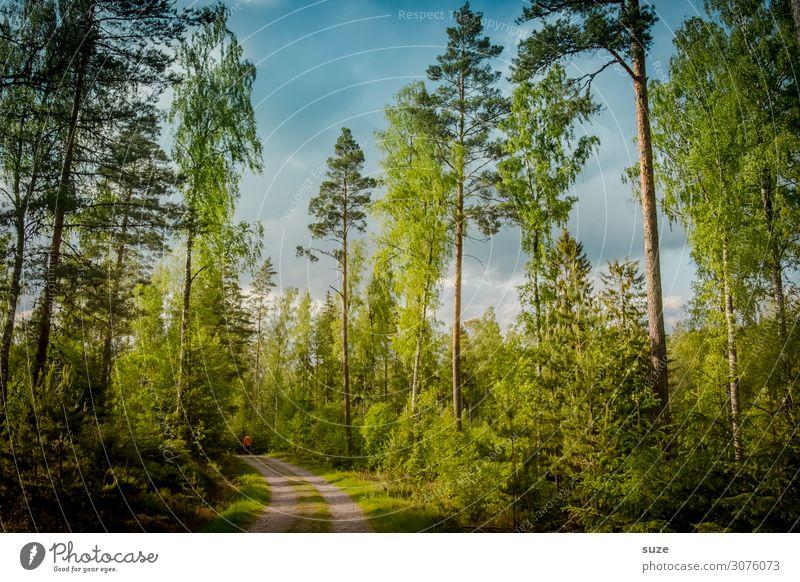 Lichter Weg Ferien & Urlaub & Reisen Natur Sommer Pflanze grün Landschaft ruhig Wald Gesundheit Umwelt Wege & Pfade Freiheit Ausflug wandern Abenteuer Fußweg