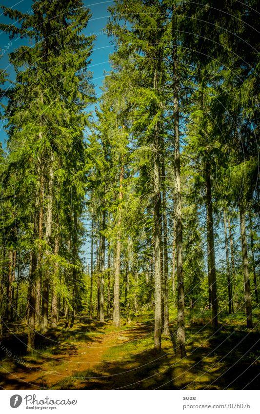 Altbestand im Sonnenlicht Gesundheit Wohlgefühl ruhig Ferien & Urlaub & Reisen Ausflug Abenteuer Freiheit wandern Umwelt Natur Landschaft Pflanze Klima