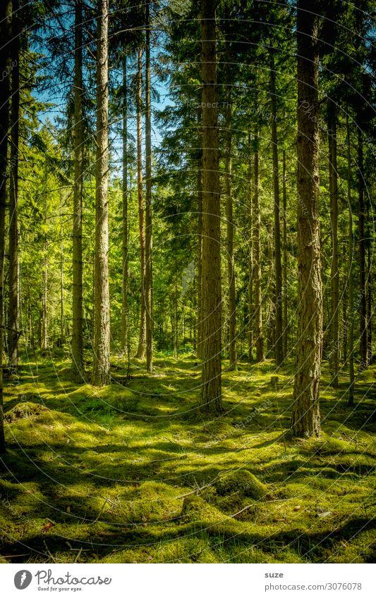 Kein Mensch Gesundheit Wellness harmonisch Wohlgefühl ruhig Ferien & Urlaub & Reisen Abenteuer Freiheit Sommer Umwelt Natur Landschaft Pflanze Klima Moos Wald