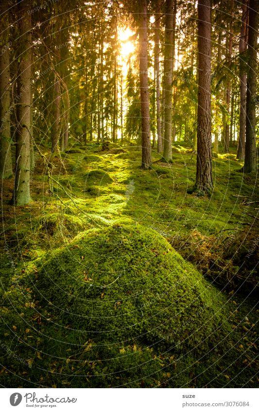 Zauberhügel Gesundheit Wohlgefühl ruhig Ferien & Urlaub & Reisen Ausflug Abenteuer Freiheit Sommer wandern Umwelt Natur Landschaft Pflanze Klima Moos Wald Hügel