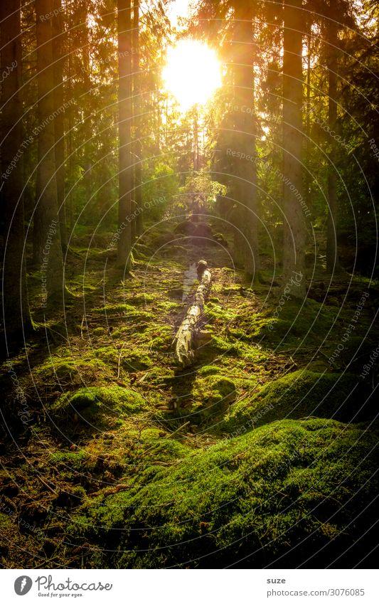 Im Licht Gesundheit Wohlgefühl ruhig Ferien & Urlaub & Reisen Ausflug Abenteuer Freiheit Sommer wandern Umwelt Natur Landschaft Klima Moos Wald Hügel grün