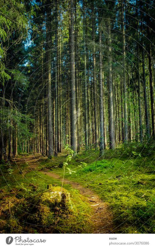 Nachwuchs Ferien & Urlaub & Reisen Natur Pflanze grün Landschaft ruhig Wald Gesundheit Umwelt natürlich Wege & Pfade Freiheit braun Ausflug wandern Abenteuer