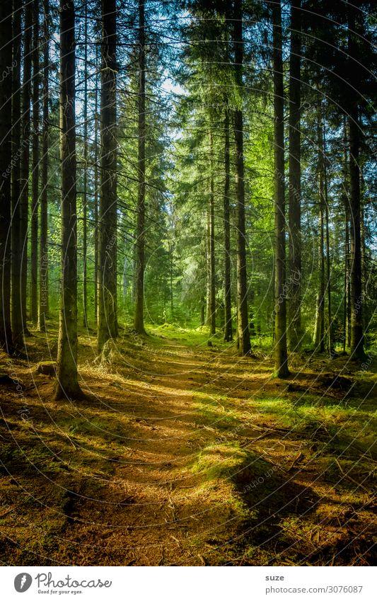 Klara auf Streife Ferien & Urlaub & Reisen Natur Pflanze grün Landschaft ruhig Wald Gesundheit Umwelt Wege & Pfade Freiheit Ausflug wandern Abenteuer Sträucher