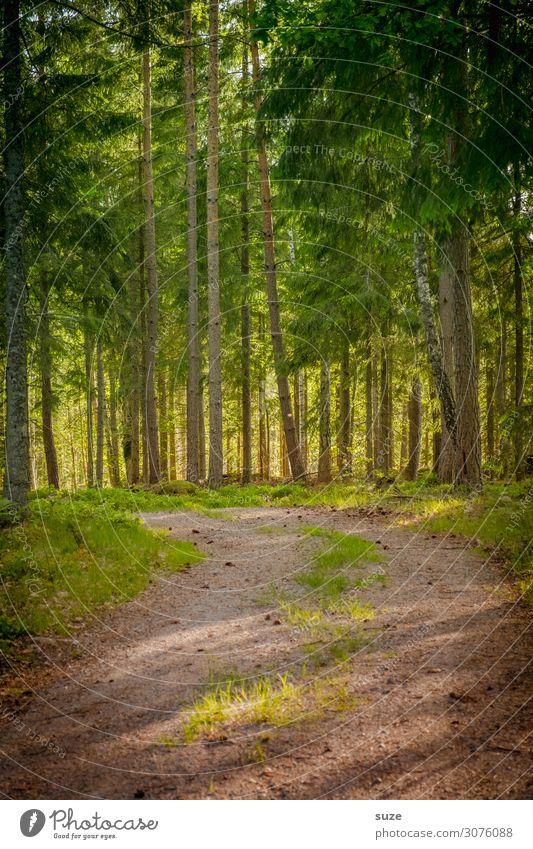 Naturpfad Gesundheit Wohlgefühl ruhig Ferien & Urlaub & Reisen Ausflug Abenteuer Freiheit wandern Umwelt Landschaft Pflanze Klima Sträucher Wald Wege & Pfade