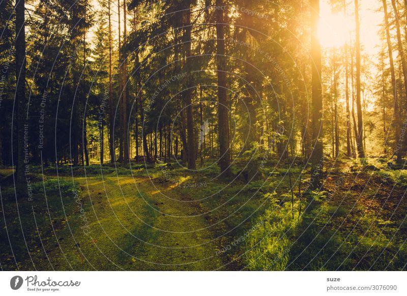 Waldlicht Ferien & Urlaub & Reisen Natur Pflanze grün Landschaft ruhig Gesundheit Umwelt Wege & Pfade Freiheit Ausflug wandern Abenteuer Sträucher Klima