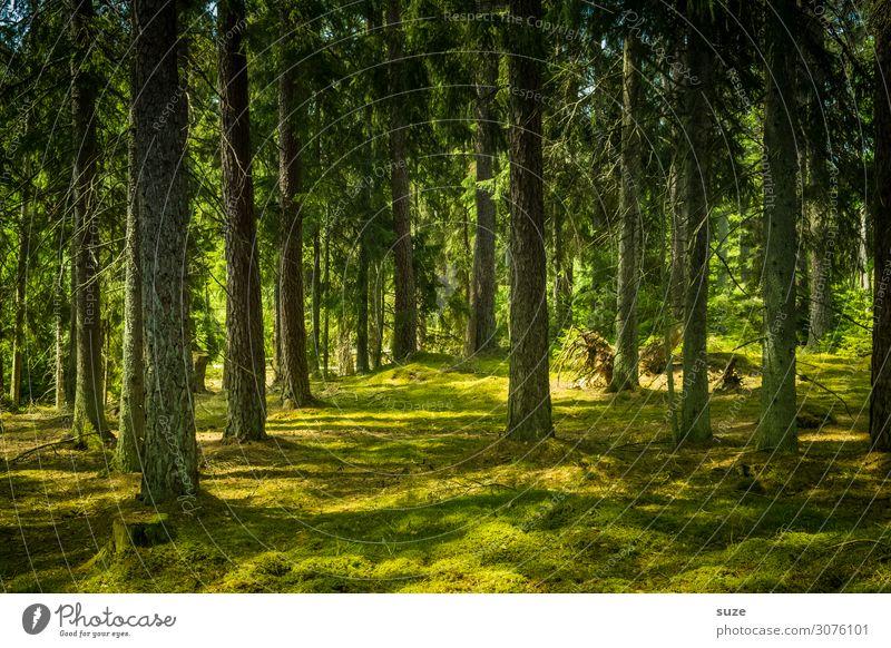 Waldteppich Ferien & Urlaub & Reisen Natur Sommer Pflanze grün Landschaft ruhig Gesundheit Umwelt Freiheit Ausflug wandern Abenteuer Klima Wellness