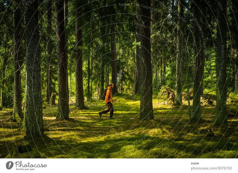 Waldgast Gesundheit Ferien & Urlaub & Reisen Ausflug Abenteuer Freiheit wandern Mensch 1 30-45 Jahre Erwachsene Umwelt Natur Landschaft Klima Moos Wege & Pfade