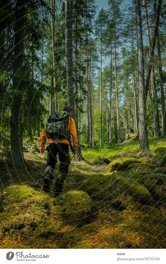 Gut zu Fuß Gesundheit Ferien & Urlaub & Reisen Ausflug Abenteuer Freiheit wandern Mensch Erwachsene 1 30-45 Jahre Umwelt Natur Landschaft Klima Moos Wald Felsen
