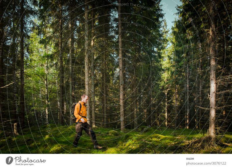 Aufzack! Mensch Ferien & Urlaub & Reisen Natur Sommer Pflanze grün Landschaft ruhig Wald Gesundheit Umwelt Wege & Pfade Freiheit Ausflug wandern Aktion