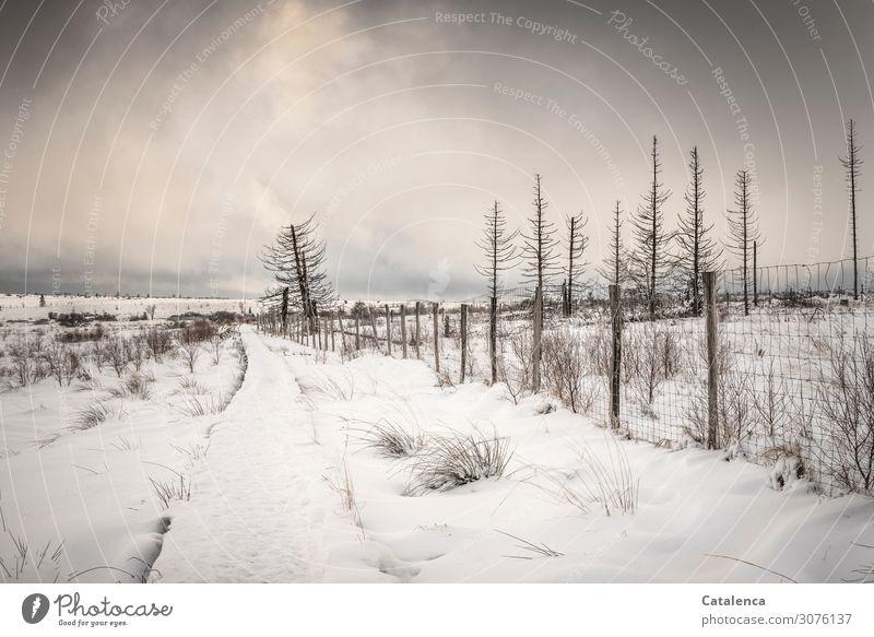 Eiszeit | Seltenheitswert Winter Schnee wandern Umwelt Landschaft Himmel Wolken Horizont Klima Klimawandel schlechtes Wetter Frost Pflanze Baum Sträucher