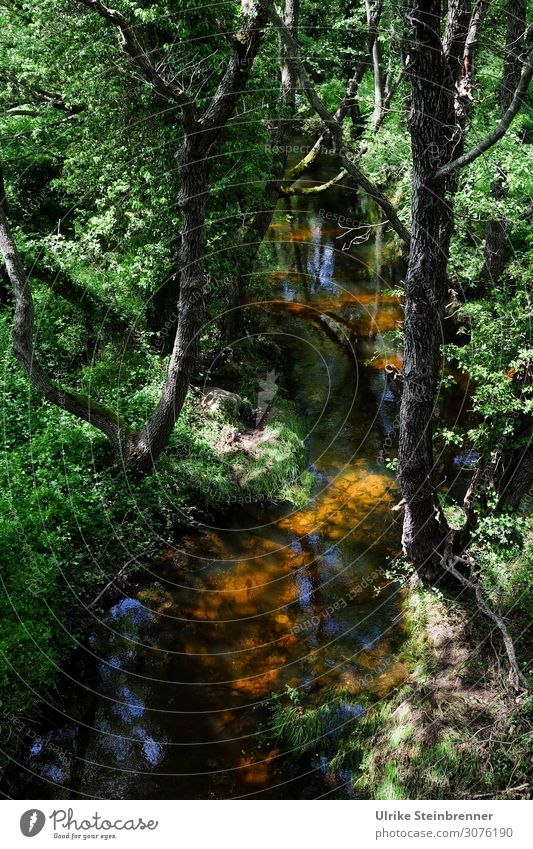 Idyllisch Umwelt Natur Landschaft Pflanze Wasser Frühling Schönes Wetter Baum Sträucher Flussufer Bach atmen glänzend nachhaltig nass natürlich Sauberkeit grün