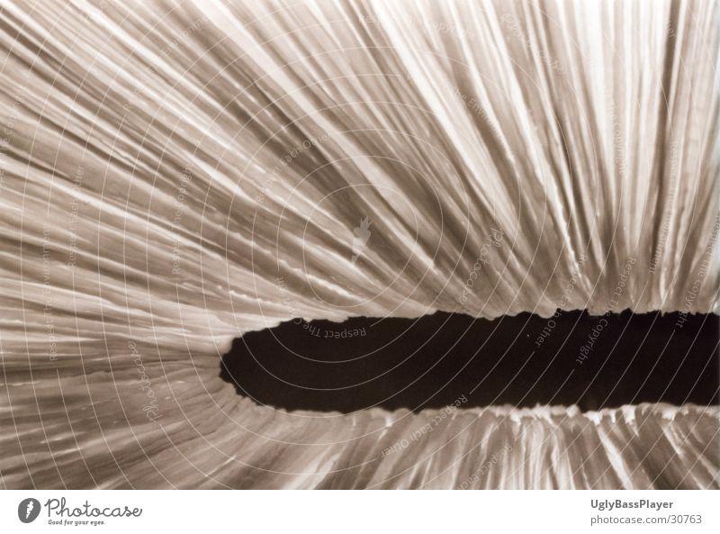 Bogen des Lichts weiß schwarz dunkel hell Fototechnik