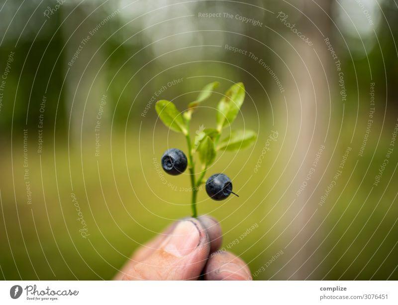 Blaubeeren sammeln Natur Gesunde Ernährung Sommer Pflanze blau grün Hand Wald Gesundheit Umwelt Frucht Sträucher lecker Wohlgefühl Sommerurlaub Suche