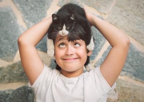 Katze Kind Mensch Tier Freude Lifestyle Liebe lustig Gefühle Junge Spielen Zusammensein Freundschaft Zufriedenheit maskulin Lächeln