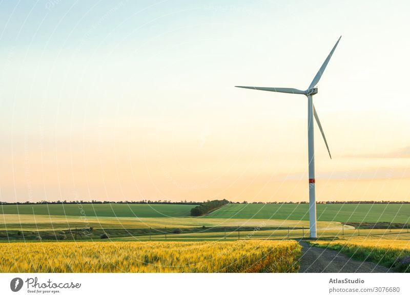 Windturbine und schöne Felder bei Sonnenuntergang, Platz für Text Mühle alternativ Natur Ökologie Wiese Panorama regenerativ Ackerbau Morgen Pflanze