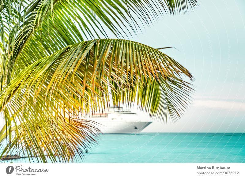Palme und ein Kreuzfahrtschiff in der Karibik Reichtum exotisch schön Erholung Freizeit & Hobby Ferien & Urlaub & Reisen Tourismus Ausflug Sommer Meer Insel