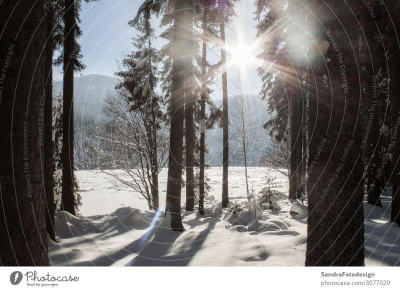 Winter landscape in Bavaria Ferien & Urlaub & Reisen Natur Weihnachten & Advent Landschaft Wald kalt Schnee Deutschland Freizeit & Hobby wandern Wetter Europa