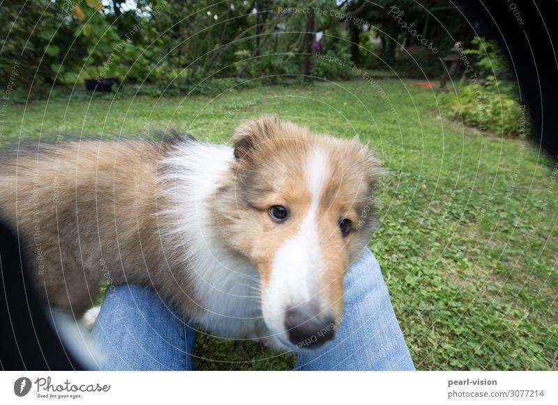 my little friend Hund Tier niedlich Haustier Tiergesicht Collie