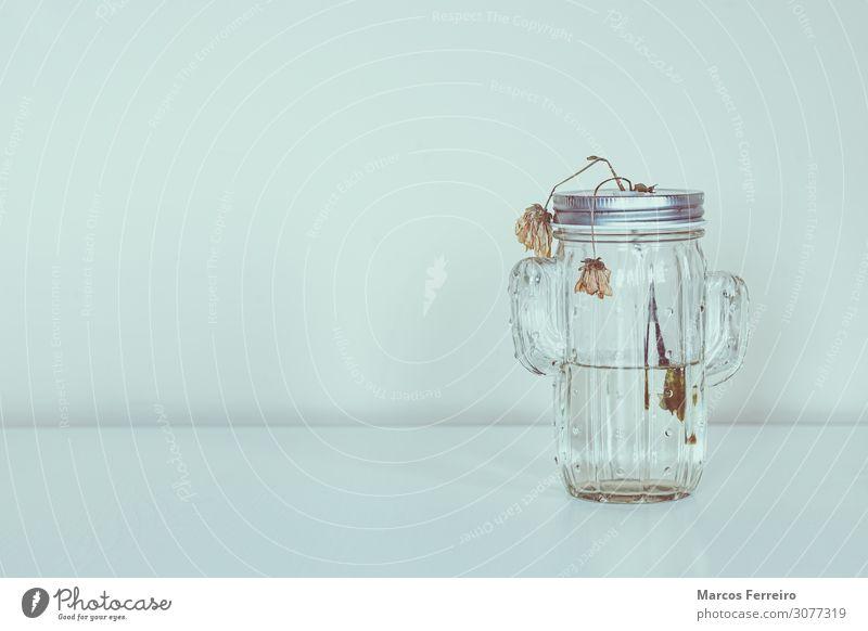 tote Blumen im Glasgefäß auf weißem Hintergrund Design schön Dekoration & Verzierung Tisch Natur Pflanze Blatt Blüte Blumenstrauß alt natürlich Tod altehrwürdig