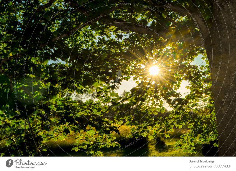 Sonnenlicht, das durch die Blätter scheint Herbst Hintergrund schön Schönheit Umwelt Laubwerk Wald Waldwiese grün Dschungel Landschaft Blatt Licht Nebel Morgen