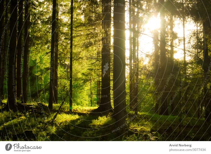 Sonnenlicht, das durch Bäume scheint Herbst Hintergrund schön Schönheit Umwelt Laubwerk Wald Waldwiese grün Dschungel Landschaft Blatt Blätter Licht Nebel