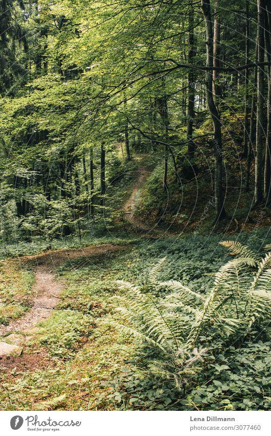 Wald Alpen Allgäu 1 Freizeit & Hobby Ferien & Urlaub & Reisen Ausflug Abenteuer Camping Sommer Berge u. Gebirge wandern Umwelt Natur Landschaft Erde Frühling