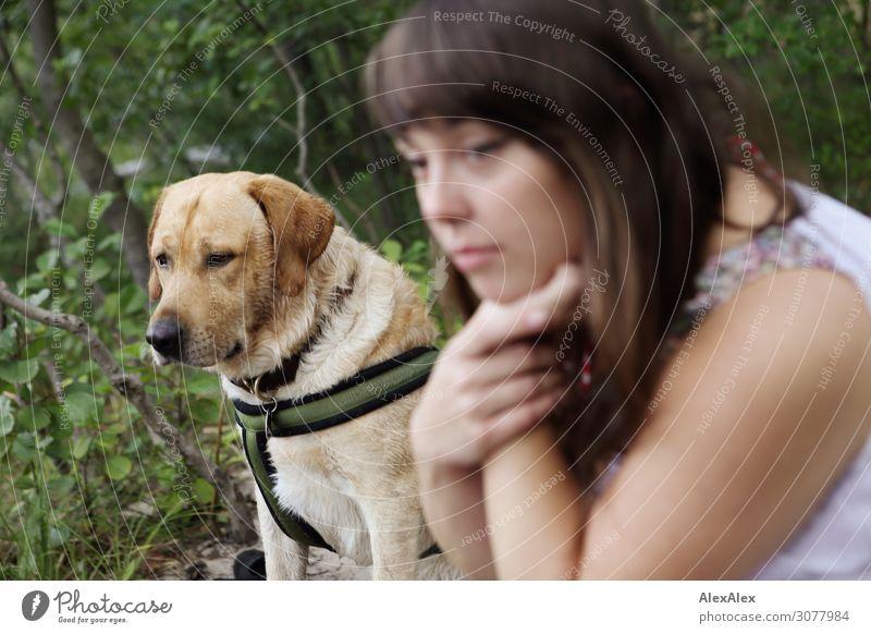Labrador mit jungen Frau im Wald Stil schön harmonisch Junge Frau Jugendliche 18-30 Jahre Erwachsene Natur Sommer Schönes Wetter brünett blond Hund Blick warten