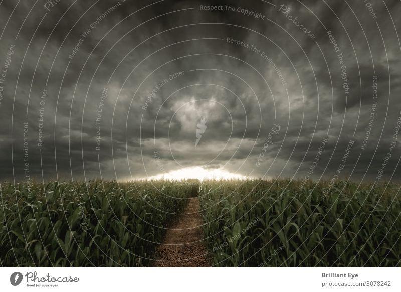 Untergangsstimmung Natur Horizont Sonnenaufgang Sonnenuntergang Sommer Klima schlechtes Wetter Unwetter Wind Sturm Nutzpflanze Feld Kornfeld gruselig