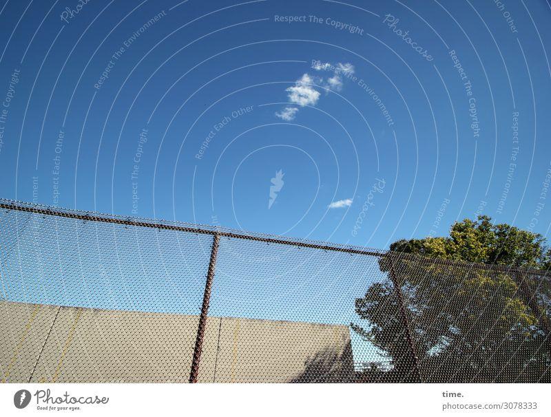 Tatzenwölkchen Himmel Wolken Herbst Schönes Wetter Baum New York City Bauwerk Gebäude Zaun hoch Sicherheit Schutz Warmherzigkeit Wachsamkeit diszipliniert