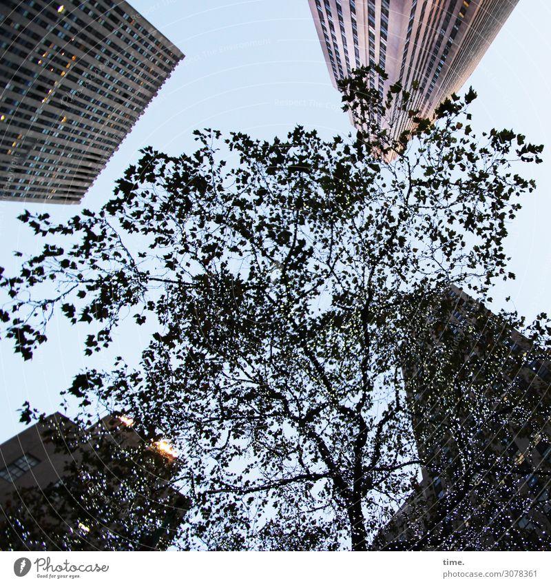 Arroganz & Ohnmacht Himmel Pflanze Stadt Baum Einsamkeit Architektur kalt Gebäude Hochhaus Kraft USA hoch Turm Macht Todesangst Bauwerk