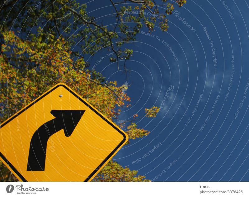 Himmelsrichtung | on the road again Schönes Wetter Baum Verkehr Verkehrszeichen Verkehrsschild Richtung richtungweisend Orientierungszeichen Orientierungspunkt