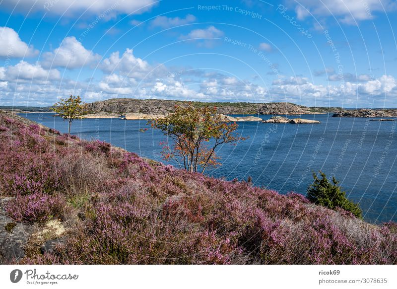 Blick auf die Insel Dyrön in Schweden Erholung Ferien & Urlaub & Reisen Tourismus Sommer Meer Natur Landschaft Wasser Wolken Baum Sträucher Felsen Küste Nordsee