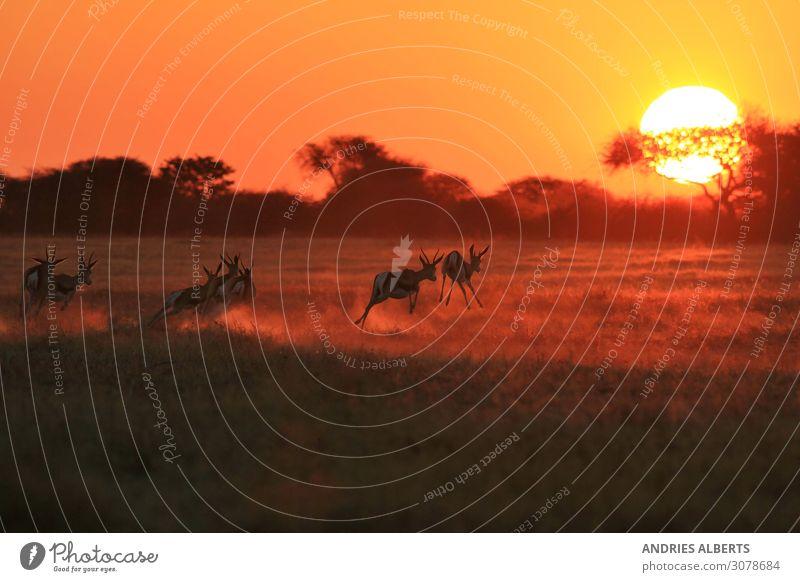 Ferien & Urlaub & Reisen Natur Sommer rot Sonne Tier Umwelt Tourismus Freiheit orange Ausflug springen Park gold Wildtier Tiergruppe