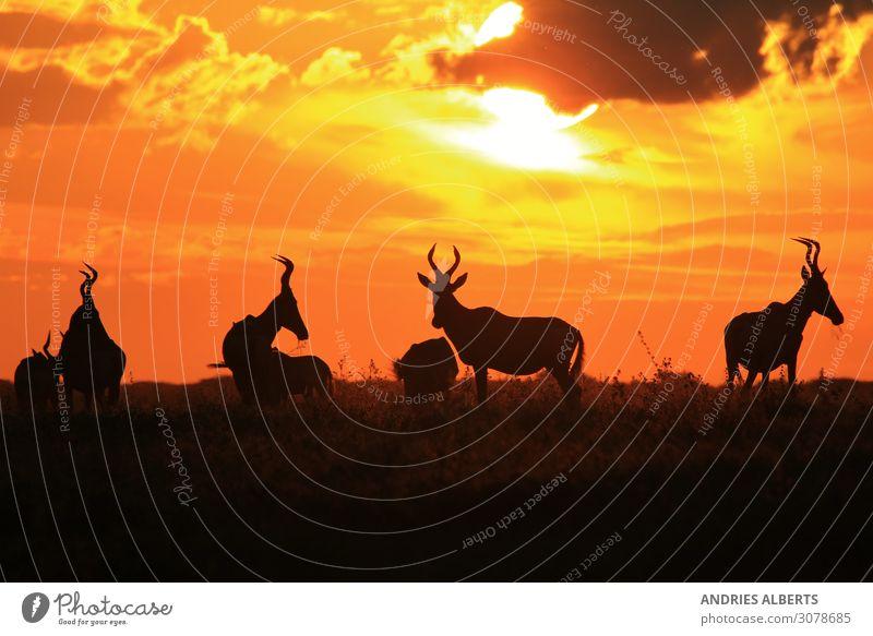 Roter Hartebeest - Farben in der Natur Umwelt Landschaft Tier Urelemente Erde Himmel Wolken Horizont Sonne Sommer Schönes Wetter Wärme Park Wildtier Tiergruppe
